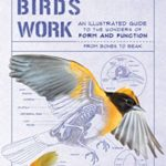 [PDF] [EPUB] How Birds Work: An Illustrated Guide to the Wonders of Form and Function—from Bones to Beak Download