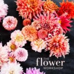 [PDF] [EPUB] The Flower Workshop: Lessons in Arranging Blooms, Branches, Fruits, and Foraged Materials Download