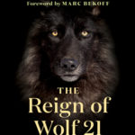 [PDF] [EPUB] The Reign of Wolf 21: The Saga of Yellowstone's Legendary Druid Pack Download