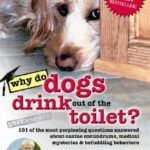 [PDF] [EPUB] Why Do Dogs Drink Out of the Toilet?: 101 of the Most Perplexing Questions Answered about Canine Conundrums, Medical Mysteries and Befuddling Behaviors Download